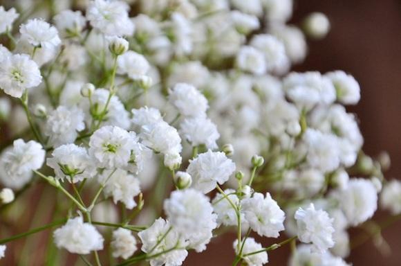 flowerduet-babysbreath-closeup