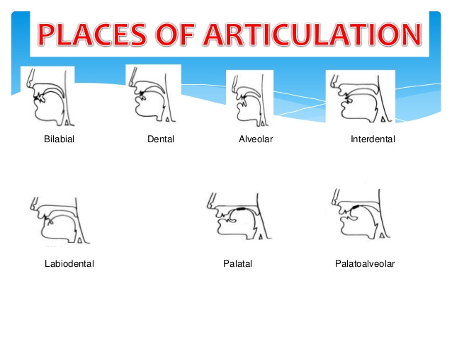 places-of-articulation-2-638